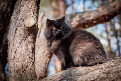 Black cat sitting in a tree Stock Images