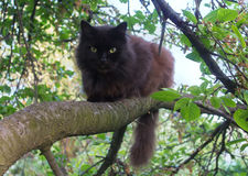 Black cat sitting on a tree Royalty Free Stock Image