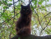 Black cat sitting on a tree Stock Photos