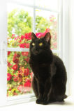 Black cat sitting at a white window Stock Photography