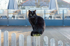 Black cat sitting on a wooden picket fence. A black cat with bright eyes sitting on a wooden white washed picket fence in front of a decking covered area in royalty free stock photography