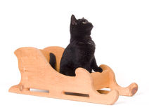 Black cat sitting in a wooden sled Royalty Free Stock Images