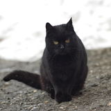 Black Cat. Sittingand waiting for his owner royalty free stock photography