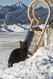 Black cat with sledge Royalty Free Stock Photography