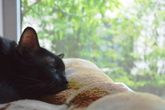 Black cat sleep near the window Royalty Free Stock Images