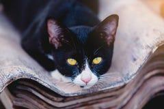 Black cat sleep on roof tiles. stock photos
