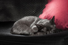 Black cat sleeping Stock Photo