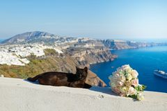 Black cat sleeping. On the background of the sea landscape of Greece stock image