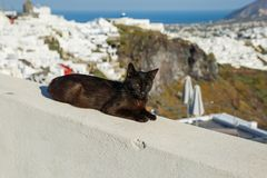 Black cat sleeping. On the background of the sea landscape of Greece royalty free stock photos