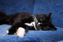 Black cat sleeping on the blue sofa Stock Images