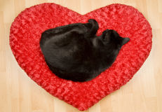 Black Cat Sleeping on a Pillow Stock Photography