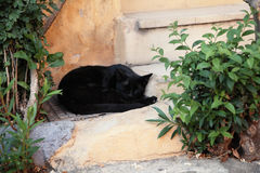 Black cat sleeping on the streets Stock Photography
