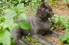 Black cat sleeping. Black thailand cat lying on the ground Stock Images
