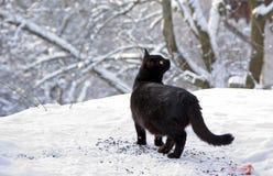 Black cat in snow Royalty Free Stock Photos
