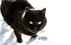 Black cat at snow Royalty Free Stock Photos