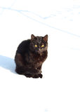 Black cat  in the snow in winter Stock Image