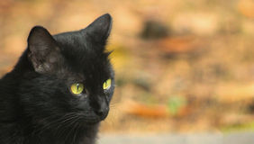 Black Cat-spotted dinner Royalty Free Stock Photos
