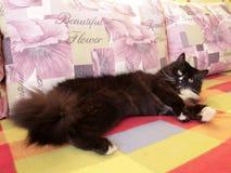 Black cat sprawled on the sofa Royalty Free Stock Photo