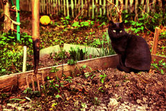 Black cat on the spring seedbed Stock Image