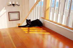 Black cat by the stairs. A black cat protectively guards the top of a staircase stock photos