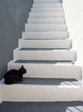 Black cat on the stairs. Black cat sitting on the stairs stock photography