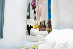 Black cat on the stairs of the house Stock Photography