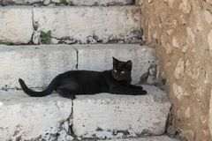 Black cat on stairs. Rethymno Crete, Greece royalty free stock image