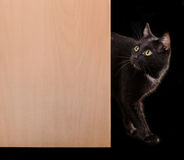 Black cat standing in doorway looking up Stock Images