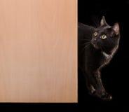 Black cat standing in doorway looking up. Black cat walking, doorway on black background Stock Images
