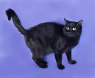 Black cat standing on lilac Royalty Free Stock Photos