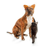 Black cat is standing next to a seated striped pit bull Stock Image