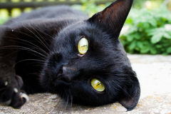 A black cat stares with yellow eyes. A black cat stares with yellow magic eyes Stock Photos