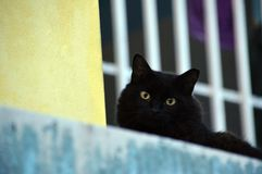 Cat stare down from balcony. A black cat staring down the camera royalty free stock photos