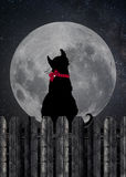 Black cat staring at full moon Stock Images