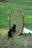 Black Cat Staring Into Mirror. In grass field Royalty Free Stock Photos