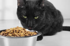 Black cat staring. Scary black cat staring/protecting feed Royalty Free Stock Photos