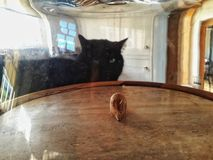 A black cat staring at a wooden mouse under a glass dome stock images