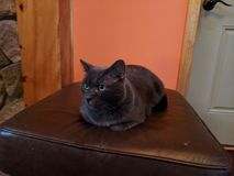 Black cat on a stool. Black cat lying on a footstool stock photo