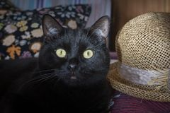 Black cat and a straw hat Royalty Free Stock Images