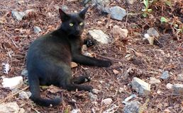 Black cat. Stray in a dirty clearing in Almeria Royalty Free Stock Photo