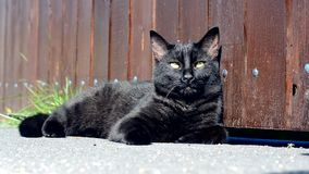 Black cat on the street Royalty Free Stock Photography