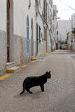 Black cat on the street of mediterranean town Stock Photos