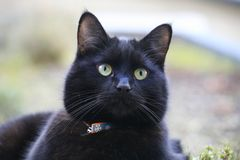 Black cat with striking green eyes. Black cat on a vegetal roof garden Royalty Free Stock Image