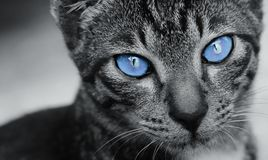 Black cat with stunning eyes Royalty Free Stock Photo