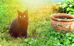 Black cat in a summer garden Royalty Free Stock Photo