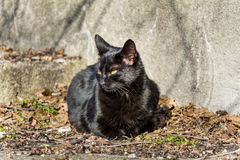 Black cat sunbathing Stock Photo