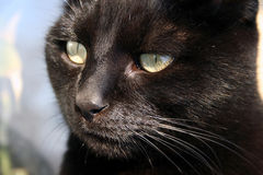 Black cat superstition Royalty Free Stock Images