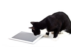 Black cat with tablet computer on white background stock photo