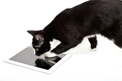 Black cat with tablet computer on white background Royalty Free Stock Photo