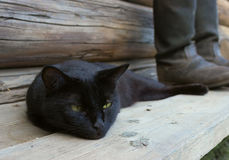 Black cat and tarpaulin boots_3 Stock Photo